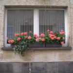 Jardiniere flori pentur balcon
