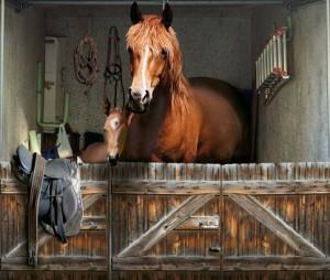 Pferde Box