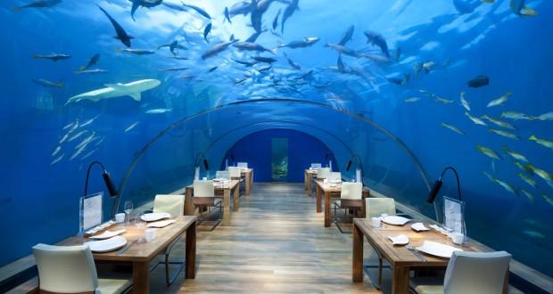 Descoperiti lumea subacvatica la restaurantul Ithaa