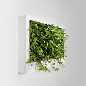plante pe pereti