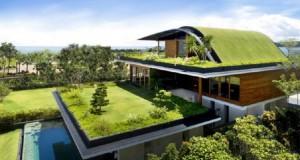 Eco style: Acoperisurile verzi in zonele urbane